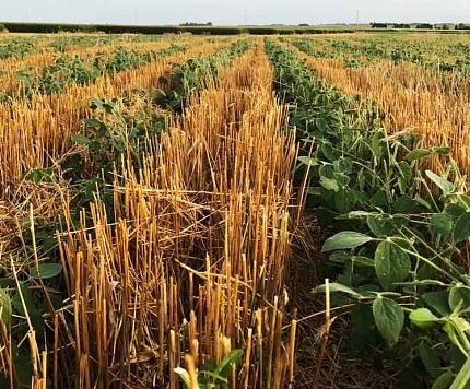 Atbalsts lauksaimniekiem saimnieciskās darbības attīstīšanai