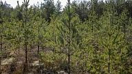 Iedzīvotāji aicināti aptaujā paust viedokli par ieceri samazināt ciršanas apjomus Rīgai piederošajos mežos