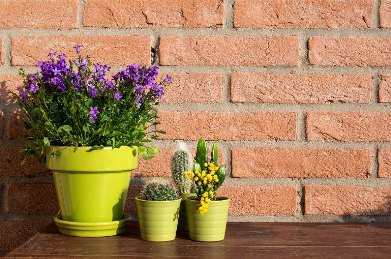 Kā izveidot mazdārziņu uz balkona vai terases? Iesaka eksperte